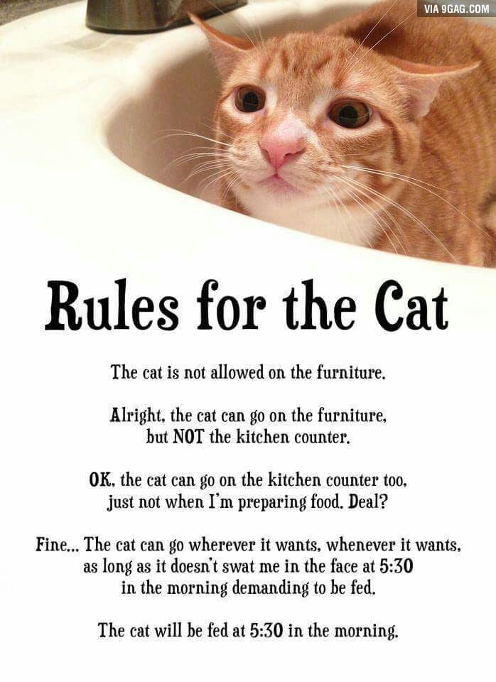 Image result for rules for the cat