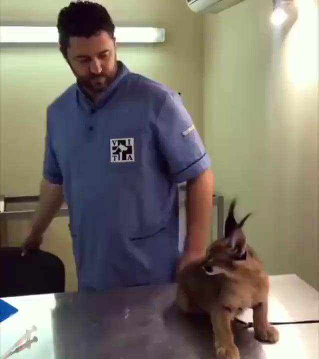 Trying to scare the vet