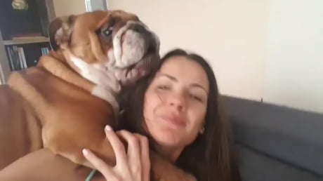 Affectionate bulldog with his mommy