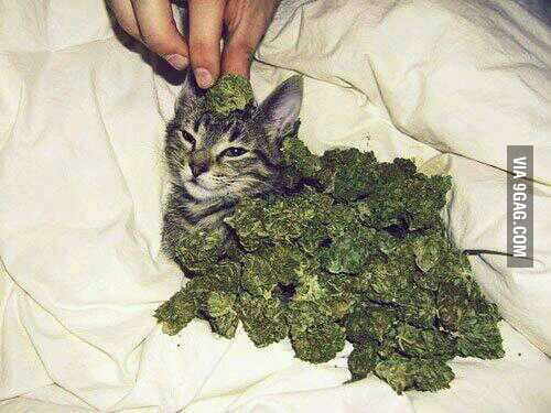 Im so high right meow