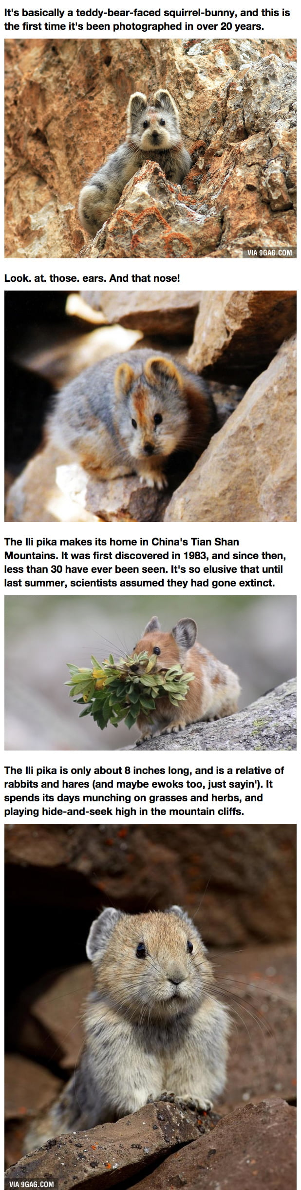 Hidden From Humans for 20 Years, This Little Cutie Is The Real-Life Teddybear You Never Knew Existed!