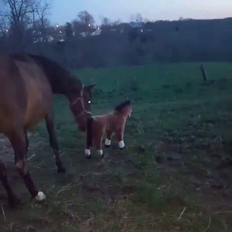 Nope, you are fake horse.