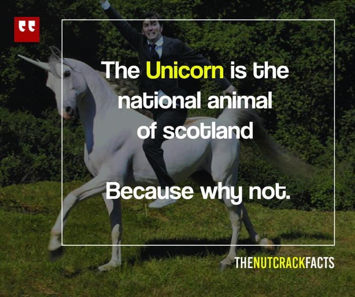 Image of: Unicorn Wish We Had Pikachu As Our National Animal 9gag Wish We Had Pikachu As Our National Animal 9gag
