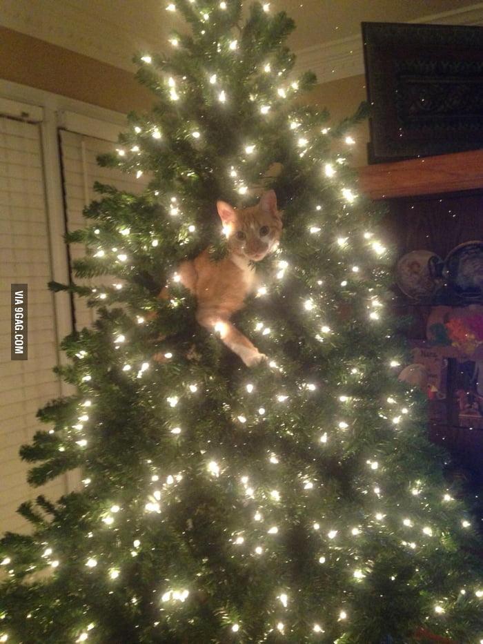I got a new ornament.