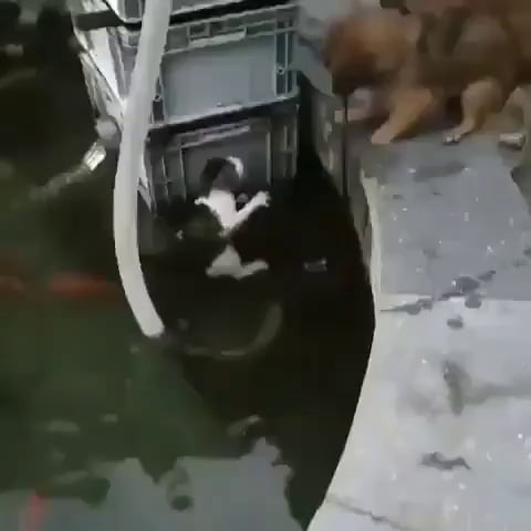 One very good boy
