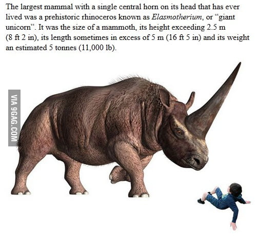 Largest real-life unicorn - 9GAG