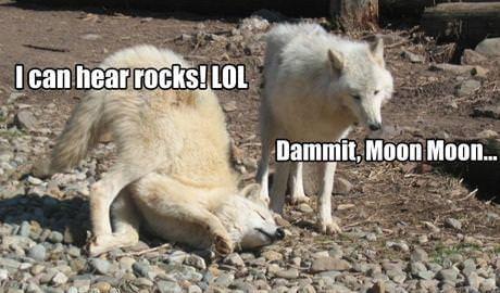 Damnit Moon Moon!