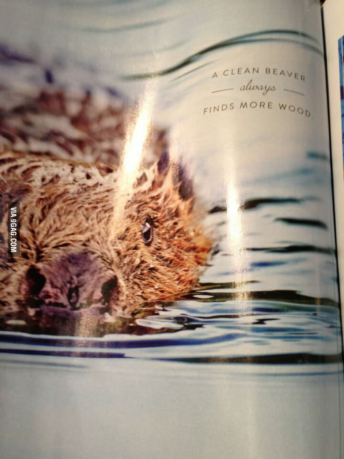 Momma always said to keep the beaver clean...