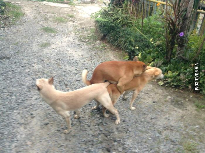 dog threesome