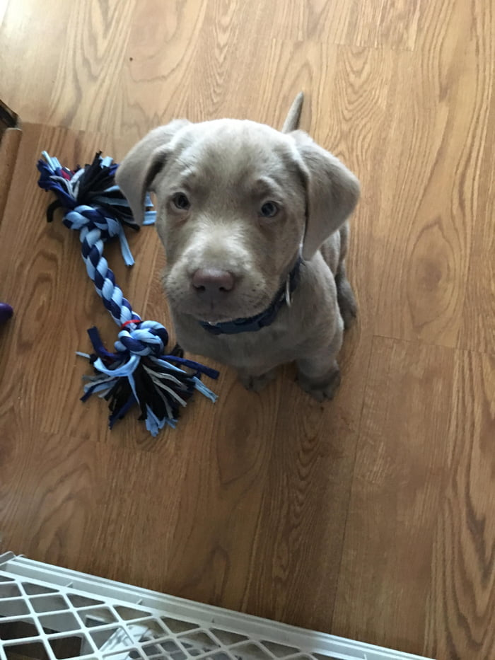 Fiancé surprised me with this little guy  Meet Springer, the