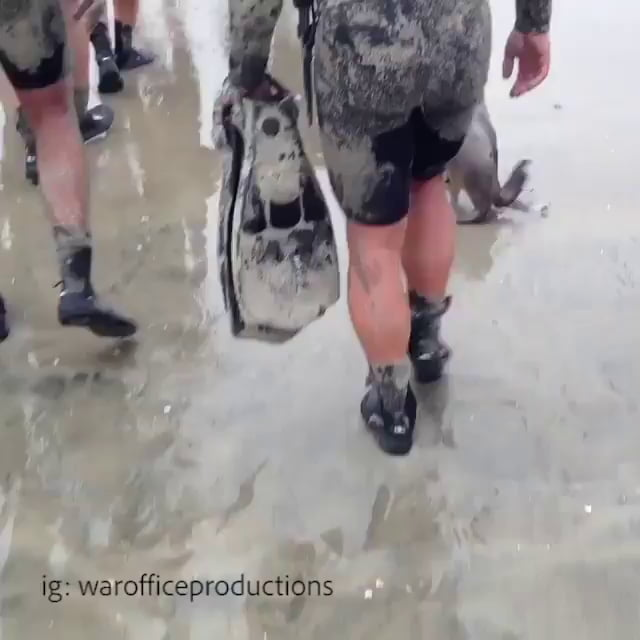 Seal pup joining some navy seals