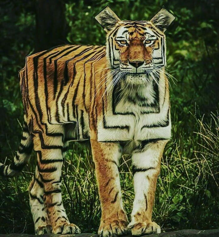 The Tiger From The First Few Tomb Raider Games 9gag