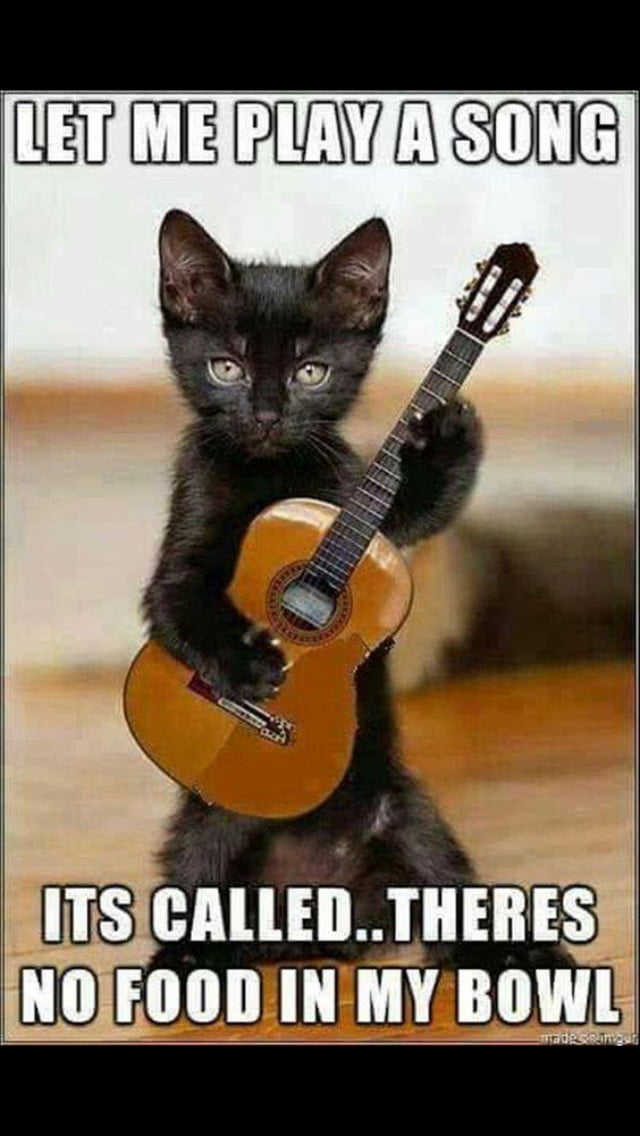 Cats be like : let me play you the song of my people - 9GAG