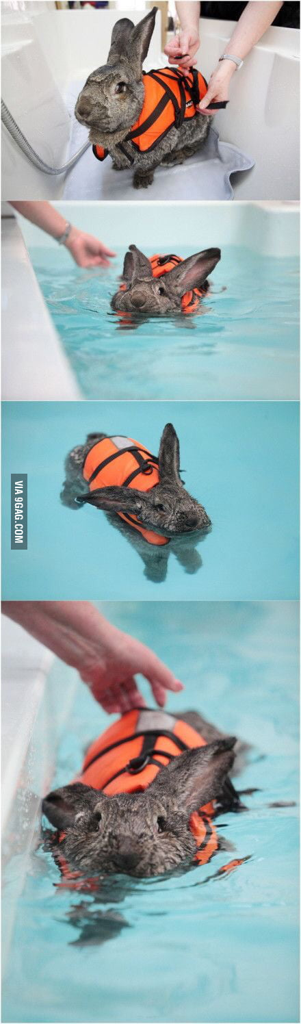 teaching rabbit to swim is it even safe 9gag