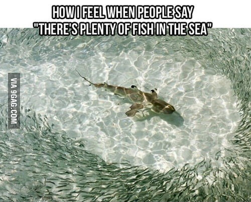 There are plenty of fishes in the sea