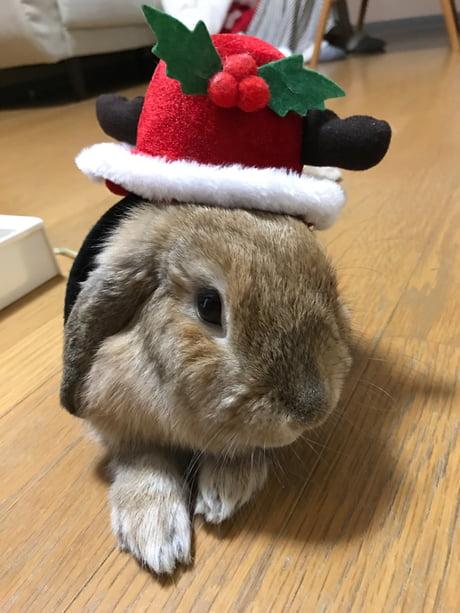 The Christmas Bunny.Merry Christmas From Chuchu The Christmas Bunny 9gag