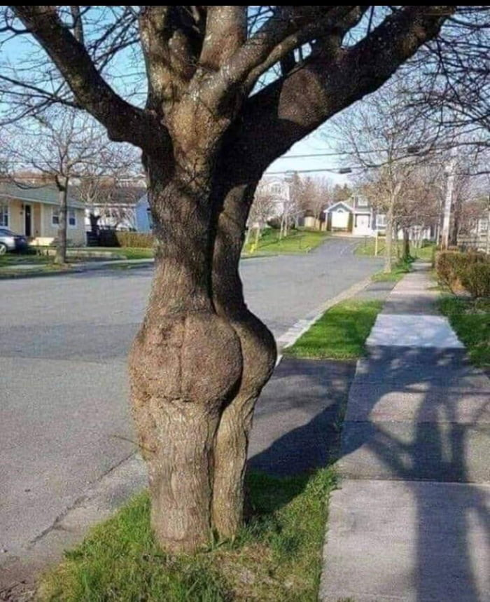 Now that's a big ass tree