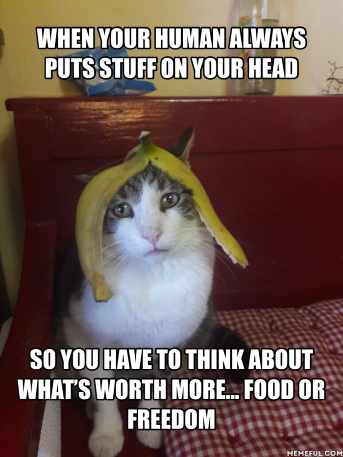 Why do cats hate bananas