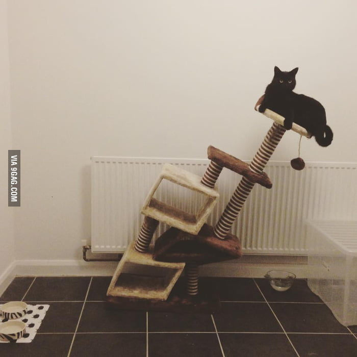 Charming Never Buy A Cheap Cat Tree Online