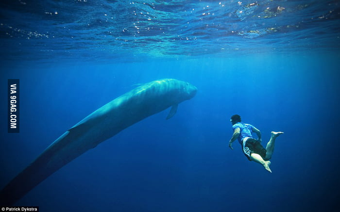 ocean and great blue whale