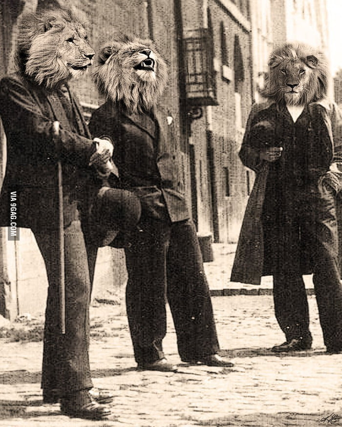 Spring Is Coming The Dandy Lions Are Already Showing Up 9gag