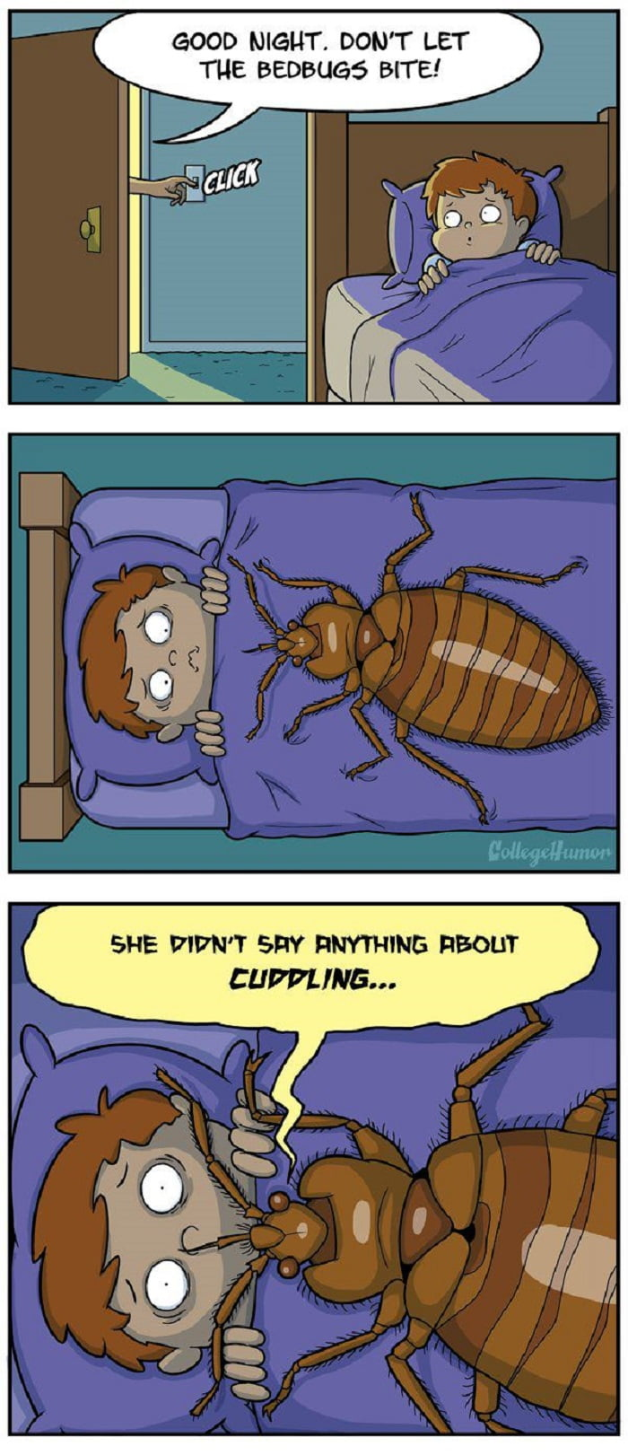 Don039t Let The Bed Bugs Bite
