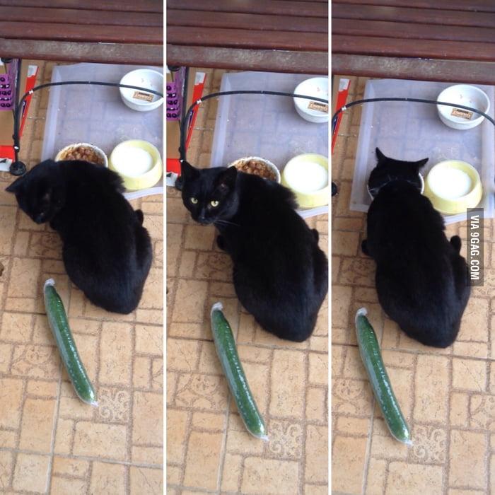 wellness core kitten food