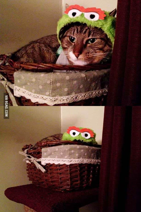 I Bought My Cat An Oscar The Grouch Costume For Halloween