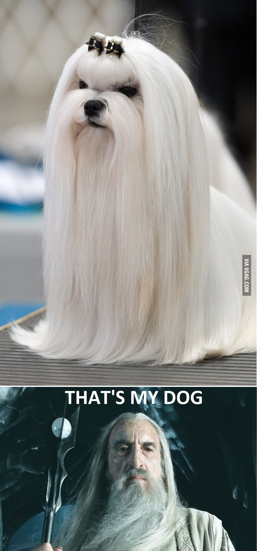 Saruman's dog