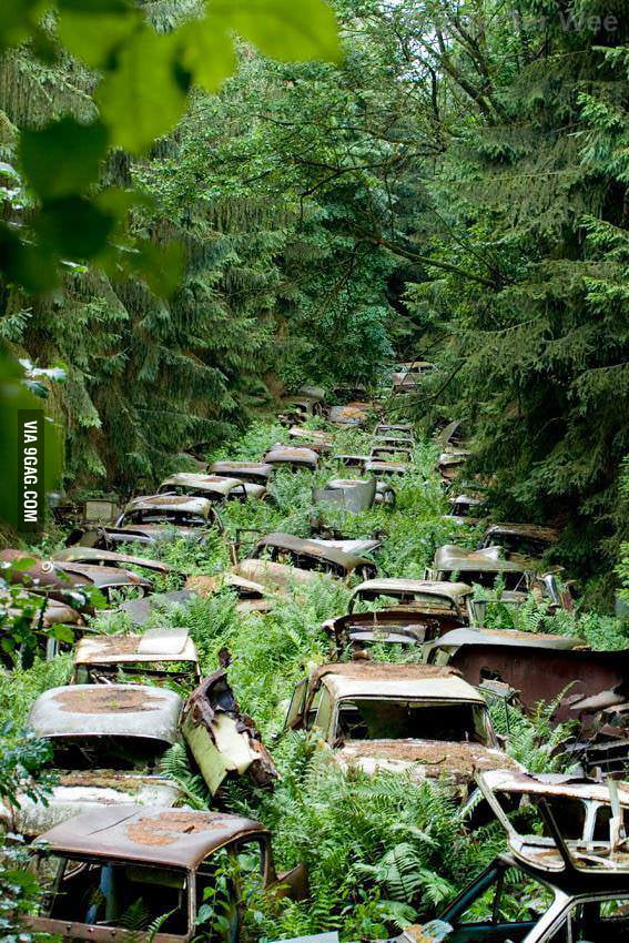 Abandoned Cars In Ardennes, Left By U.S. Servicemen After WWII