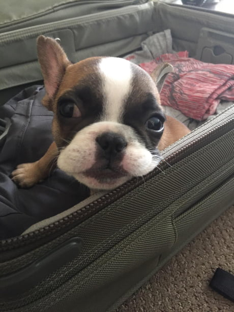 G O O D B O Y E PREPARES FOR A TRAVEL!