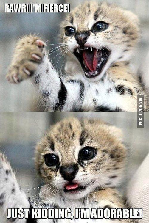 "I googled ""different cat moods"""