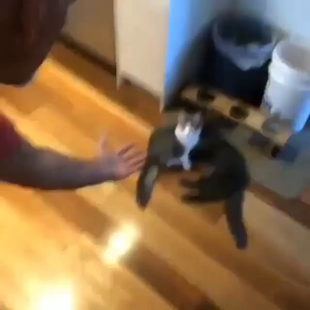 The proper way to pick up a cat
