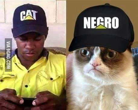 aydXEDV_700b cat \u003e negro 9gag,Cat Negro Meme