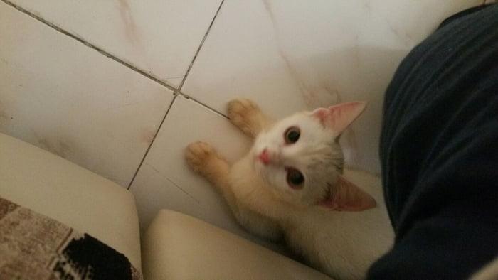 8881c05fe0 Say hello to my Kitty - 9GAG