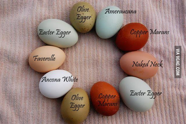 Chicken Egg Colors Chart 9gag