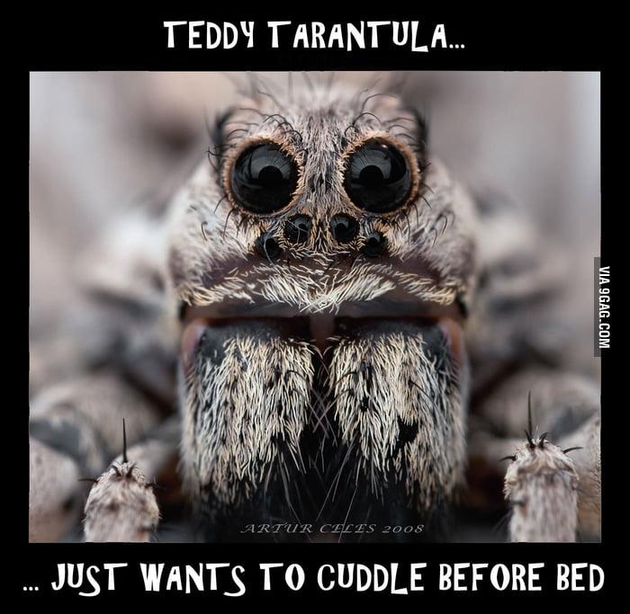 Teddy Tarantula...