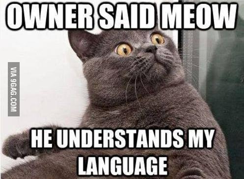 Meow Meow Meoow