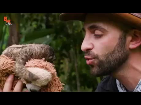 Brutal attack by baby sloth! (he almost died!) - 9GAG