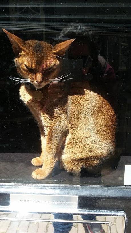 Villain's cat