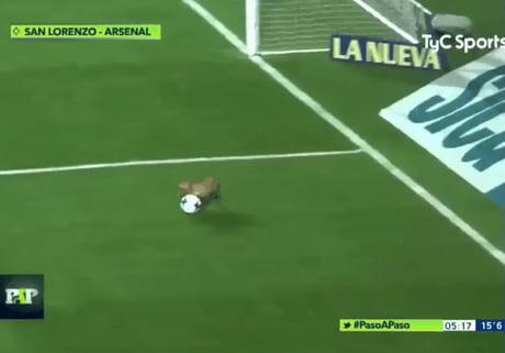 Pup interrupts soccer match, gives interview.