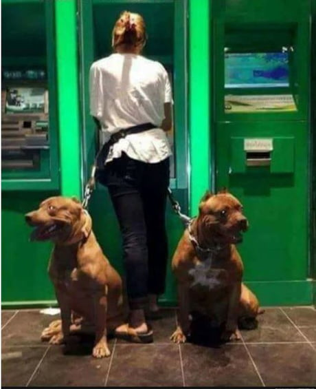 Cute Doggos will keep you safe at the bank. Or in the park. Or in your home. Basically anywhere.